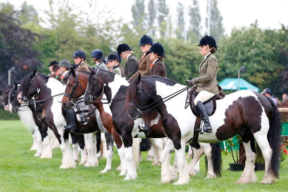 The Great Yorkshire Show Things to do in Harrogate