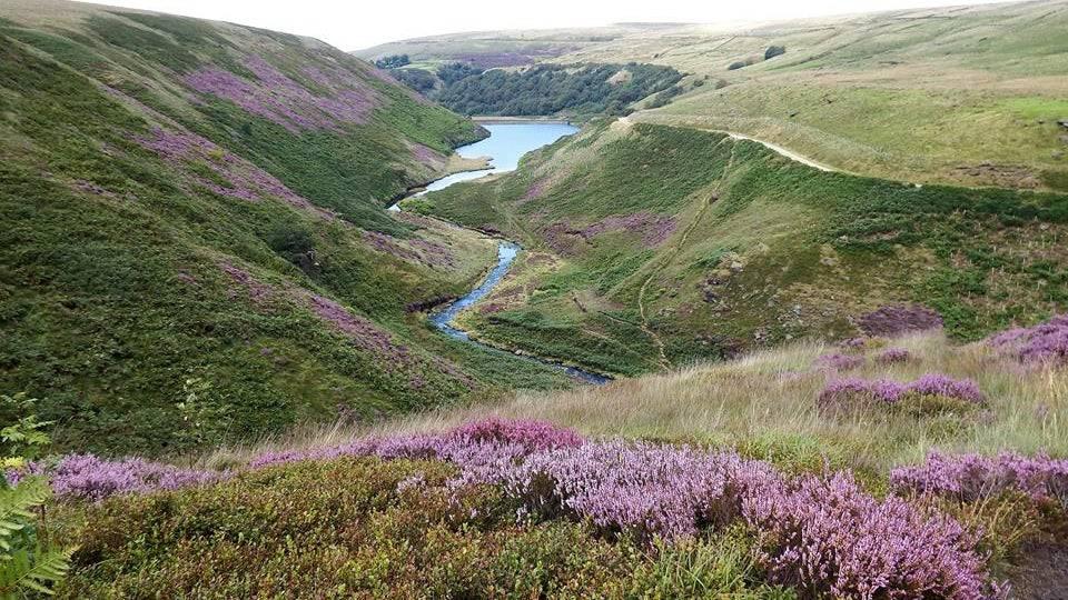 Marden Moor Estate Yorkshire Walks